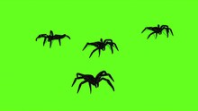 3d Illustration - Spiders On Green Screen Creepy Crawling