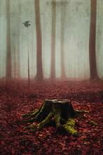 Tree Stump In Misty Autumn Forest