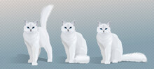 Vector White Cat Collection. Cat With Blue Eyes And Fluffy Tail Standing, Sitting And Looking In Camera. Front View Illustration