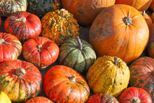 Colorful Pumpkins For Halloween, Background And Texture