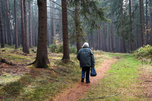 Old Man Hunting For Edible Mushroom In Woods In The Morning, Mushroom Picking Concept