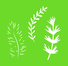 Pine And Leaves Branches Vector Illustration