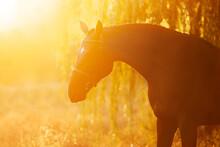 Black Horse Portrait In Sunlight