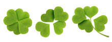 Green Clover Leaf Set Isolated On White Background. Four-leaf Clover Top View