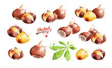Watercolor Illustration Set Of Chestnut
