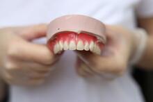 Dentist Holding Denture