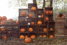 Autumn Decoration Of Halloween Pumpkins In Wooden Boxes On The Farm Outdoors. Season For Pumpkin And Thanskgiving Fesive. Rustic Garden.