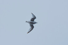 Seagull In The Sky, The North Pole
