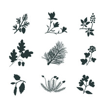 Vector Plants Set