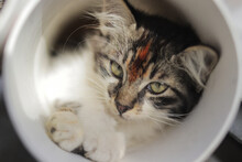 Close-up View Of Cute Kitten Playing Inside Plastic Pipe. Stock Photo Of Kittens