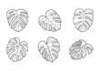 Monstera - egzotyczne liście. Kolekcja ilustracji. Liście tropikalnej rośliny do wykorzystania w projektach.