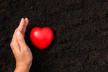 Top View Of Farmer Woman Hand Holding Red Heart On Compost Fertile Black Soil Background And Copy Space, Concept Of Love Nature, Save World, Earth Day And Hands Ecology Environment
