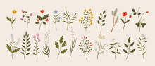 Set Of Vintage Wild Herbs, Flowers, Branches, Leaves. Botanical Vector Illustrations Of Forest Flora. Hand Drawn Colorful Floral Elements. Clipart For Design And Print