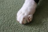 Fototapeta Zwierzęta - kocia łapa