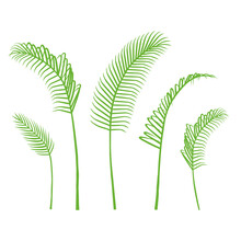 Vector Palm Leaf. Green Bangalow Palm Leaves Collection