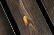 Brązowe drewniane deski elewacji budynku jako tekstura