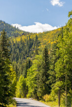 Yellow And Green Aspen Trees On The Mountainside Along Guanella Pass Road Of Colorado