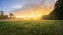 Meadow With Autumn Crocus On A Foggy Autumn Morning