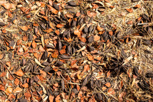 Autumn Leaves And Seed Pods On The Ground
