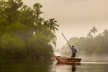 Misty Morning And A Man, Fisherman On The Boat On The River With A Wooden Stick Moving Between Palm Banks