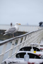 A Seagull Waiting In Front Of The Terrace Of A Restaurant. August 2021, Le Pouliguen, France.