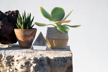 Crystal Pyramid And Succulents On A Stone Surface.