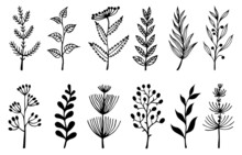 Flowers And Herbs Vector Set. Hand-drawn Doodles Isolated On White Background. Field Plants, Branches With Leaves, Grass With Inflorescences And Berries. Collection Of Botanical Sketches.