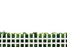 植木と白い木製のフェンス フレーム