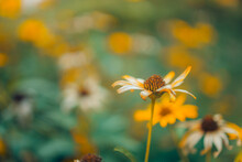 Field Flowers In Nature Under Sunlight. Floral Closeup Vintage And Toning With Retro Filter Effect. Warm Gold And Yellow Colors Over Green Foliage. Artistic Nature