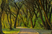 Cozy Path Covered With Tree Crowns In The Park On An Autumn Evening, Moscow Photo