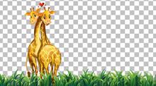 Giraffe On The Grass Field On Transparent Background