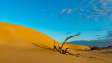 Dead Desert Tree In Lincoln National Park
