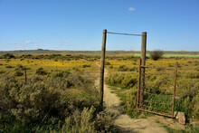 An Old Lopsided Gate In The Veld Of Namaqualand With Small Yellow Flowers In The Distance