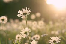 Flower On Sunset