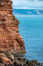Cormorants Perched On Red Otter Sandstone Cliffs At Danger Point, Walking East From Otterton Ledge, Devon