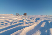 Snowy Valley With Bare Bushes Under Blue Sky