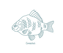 Carassius. Ray-finned Fish Crucian Carps. Open Paths. Editable Stroke. Custom Line Thickness.