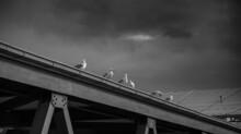 Sechs Möwen Sitzen Unter Dunklen Wolken Auf Einer Stahlbrücke