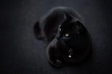 Schwarze Katze Mit Glöckchen