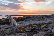 Young Puppy Dog At Sunset At The Beach In Ploemeur, France