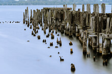 Old Pier Posts (groins) In Smooth Water Of The St. Lawrence River