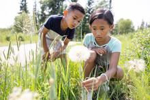 Boy And Girl Looking At Dandelion Seedhead