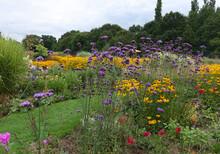 Beautiful Summer Garden Scene With Verbena Bonariensis And Black Eyed Susan