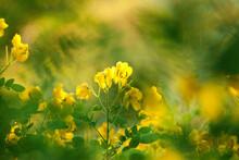 Yellpw Flower In Garden