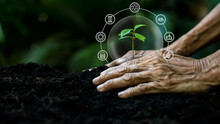 Hands Old Women Agriculture Holding And Care Plant Tree Keep Environment And Nature. Growth Of Plants Reduce Global Saving Biodiversity Nature Or Improve Society, Community And Environment