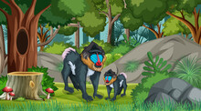 Mandrill Mom And Baby In Forest At Daytime Scene With Many Trees