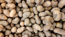 Small And Medium Sized Potatoes In Mud Close-up Top View, Harvest Of Unpeeled Potatoes, Food Background, Potato Background