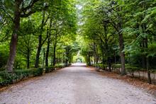 Green Tree Alley