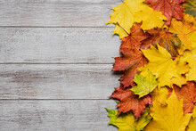 Autumn Wooden Rustic Background With Multicolored Wet Maple Leaves And Copy Space