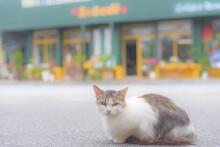 沖縄にいる野良猫
